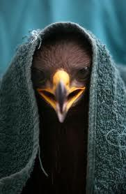 EagleCZ